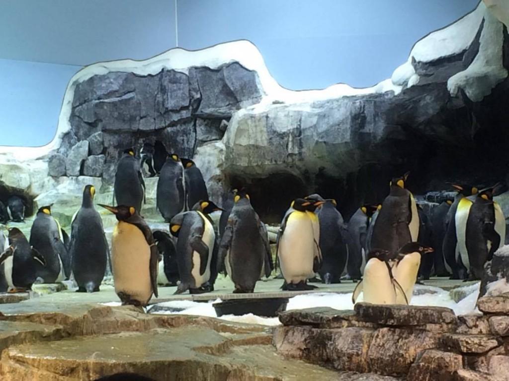 SeaWorld - Penguins - Jan. 2016
